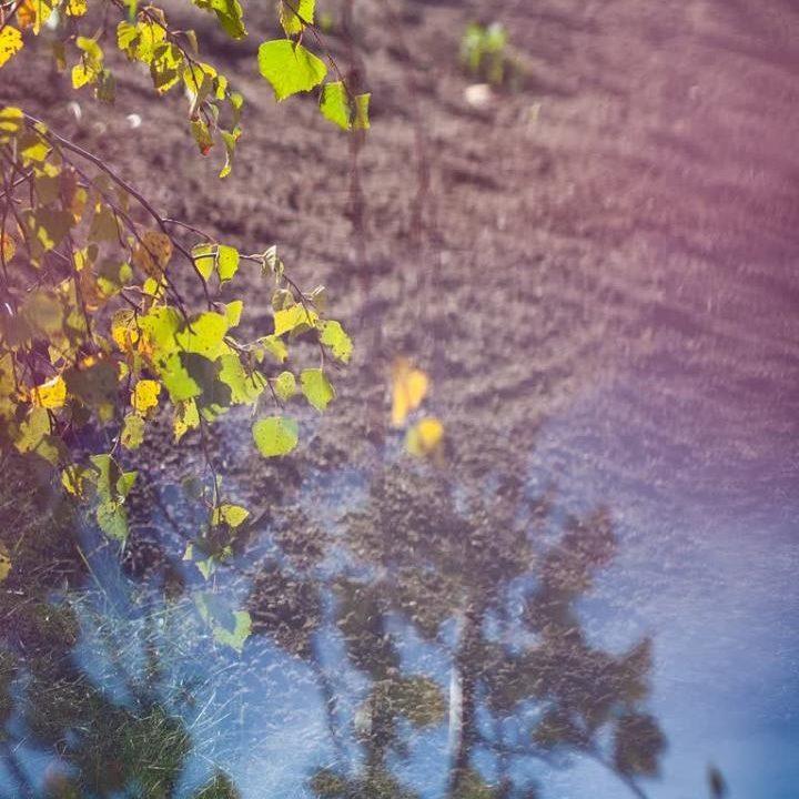 Bild Wasser u Blätter