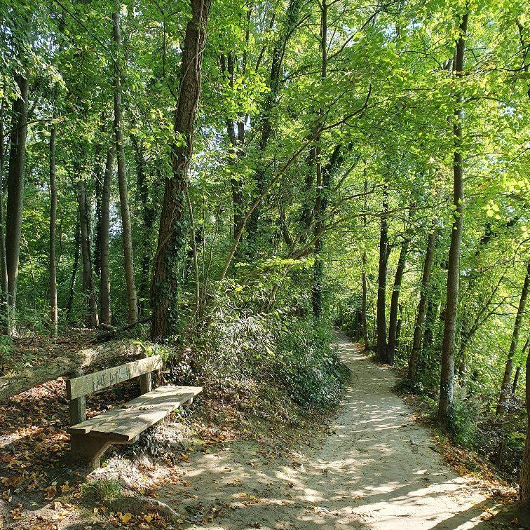 Waldpfad 2